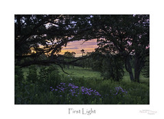 First Light (baldwinm16) Tags: forestpreserve il illinois july environment habitat midwest morning native nature naturepreserve prairie season summer sunrise natureofthingsphotography bergamot wildflowers dawn