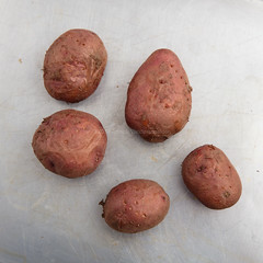 Baked potatoes. (annick vanderschelden) Tags: potato unwashed dirty starchy tuberous crop perennial nightshade solanumtuberosum edible tuber andes species indigenous food foodsupply foodcrop soil whitebackground structure starch vitamins minerals phytochemicals carotenoids naturalphenols vitaminc potassium carbohydrate resistantstarch fiber glycemicindex culinary skinon cooking whole red ovenplate hot baking baked