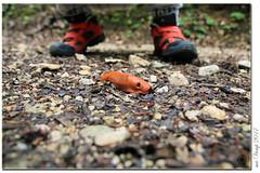 Natur Schwäbische Alb (Mr.Vamp) Tags: nature natur schwäbischealb schwaben wald forest mrvampvamp vamp
