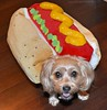 Take a Look at My Hot Dog! (yourdesignerdog) Tags: ifttt wordpress all posts wordless wednesday blog cute dog costume dogs hot national day