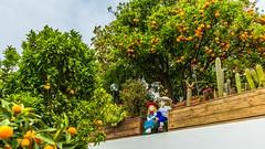 Idyl (Vladi Stoimenov) Tags: actionevents events flora forio ischia italy garden holiday idyl tour vacation walk love