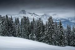 Haute-Savoie, Mont-Blanc, 19 (Patrick.Raymond (3M views)) Tags: alpes megève combloux montagne neige hiver froid gel hdr nikon bois foret arbre