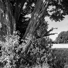 mamiya267 (salparadise666) Tags: mamiya c330 sekor 80mm orange filter fomapan 100 boxspeed caffenol cl 32min semistand nils volkmer medium format square 6x6 vintage camera tlr waist level finder region hannover niedersachsen germany lowlands plains nature analogue film bw black white monochrome
