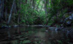 tunnel vision... (Alvin Harp) Tags: canyonville oregon may 2017 i5 naturesbeauty mountainstream longexposure sonyilce7rm2 fe41635zaoss mountainforest alvinharp