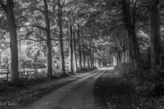 ltr-6086-bw (KazzT2012) Tags: canoneos70d trees chilterns wendover summer thechilterns