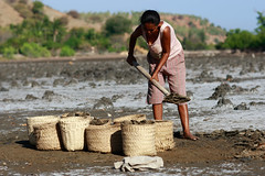 Salt making in Ulmera - 17-09-09-4 (undptimorleste) Tags: timorleste hard labor pans salt seaseaslat ulmera woman women work