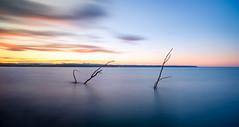 Long Sticks Stuck Fast (ajecaldwell11) Tags: sunset ankh water light trees hawkesbay newzealand longexposure napier cloud reflection tide sky ahuriri silhouette caldwell dusk clouds