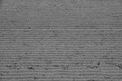 Spuren am Strand / marks at the beach 3 (Lichtabfall) Tags: inselpoel poel spuren tracks sw bw blackandwhite blackwhite strand beach sand marks timmendorf timmendorfstrand schwarzweiss textur texture monochrome ostsee mecklenburgvorpommern