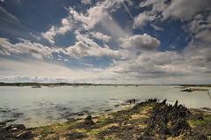 Essex North Fambridge (daveknight1946) Tags: clouds northfambridge essex rivercrouch seaweed yachts