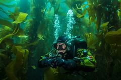 diver3Jul7-17 (divindk) Tags: anacapa anacapaisland californiaunderwater channelislands channelislandsnationalpark francescocameli gue globalunderwaterexplorers sanmiguelisland santabarbara santacruzisland santarosaisland scubadiving underwater ventura diver diverdoug drysuit kelp kelpforest marine ocean reef scubadiver sea underwaterphotography