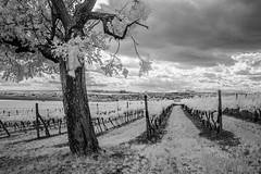SAM_9905 (Dominik Novotny) Tags: infrared lednice valtice samsung nx11 infra red awesome conversion 720nm highlights czech republic summertime summer trip ir love this beautiful nostalgic another world