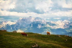 (dastine) Tags: mountain landscape nature grass sky hayfield outdoors panoramic cloud summer hill travel agriculture farm pasture horizontal field valley mountainpeak scenic