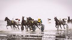 Duhner Wattrennen (TS_1000) Tags: pferdewette pferderennen duhnerwattrennen traber ebbe watt olympus niedersachsen nordseeküste nordsee trabrennen wettrennen wattrennen duhnen cuxhaven