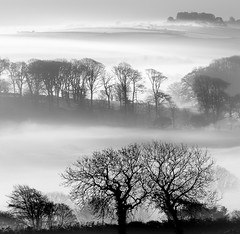 Layers in the Mist (Mick Blakey) Tags: tranquil cornish mist abstract blackwhite trees white restful monochrome silhoette dreamy relaxing peaceful black fog serene misty cornwall surreal