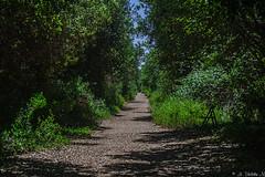 NEL BOSCO.   ----    WALKING IN THE WOOD (cune1) Tags: italia italy toscana tuscany boschi wood natura nature alberi trees panorama landscape