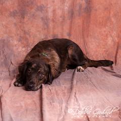 """Fanta"" female - Looking for Furever Home (ms godard) Tags: debbiegodard nikond700 escc barc animals adoption rescue baldwin humane society"