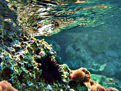 PA040255nnn (Enorasis Project photography) Tags: underwater vouliagmeni lemos olympuss790sw olympus waterproof