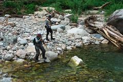 FlyFisher DSC_3693 (touhenboku) Tags: iwana char fly fishing flyfishing stream branch water rock