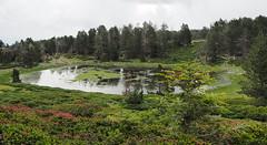Estanyol de Balaig (tgrauros) Tags: canigó estany estanyoldebalaig cortalets pladelsestanyols