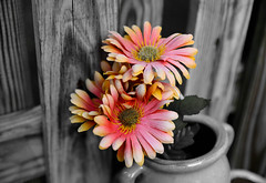 Black and White w/ a touch of color (labrinyryan) Tags: amazing blackandwhite flowers cool nice beautiful light dark sunsets love peace tranquility message life