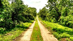 The Beautiful Way😘😘😘 #Grass #Way #Road #Tree #Green #Sky #Sunnywheather #Clouds #Sun #Blue #Vibes #Love #NatureLove #MotoCam #MotoG3 #HDR #Contrasting #Rock #2ways 😘😘 #Likes #comments # (rockani451) Tags: love green motog3 clouds comments grass tree sun rock contrasting vibes yahoo cool likes flicker sunnywheather hdr road faves public blue way motocam naturelove 2ways sky
