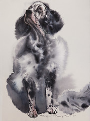 windy (Olga Flerova) Tags: dog dogs pets animals watercolor drawing