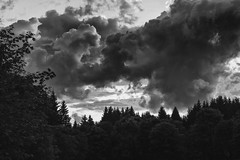 and as the night is dark and full of terrors (Glupschmops) Tags: lowkey darkness dark clouds himmel sky dusk abendhimmel moody landscape darkscape germany woods wald forest intothewoods