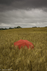 Red Umbrella (Explored 16-07-17) 52-28 (RattySV) Tags: nikon nikond7200 nikon18140mm landscape barley crop harvest