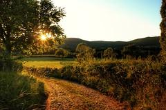 vallée des vaux (Anthony Duvaut) Tags: couchédesoleil soleil saôneetloire valléedesvaux paysage arbre prés