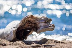 Driftwood or Beach Monster? (Jens Haggren) Tags: driftwood beachmonster beach sand water sea reflections light bokeh summer värmdö sweden jenshaggren