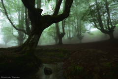 Creepy forest (Hector Prada) Tags: bosque hayedo rio niebla atmósfera bruma mágico oscuro encantado árbol verano forest fog river mist enchanted charmed creepy dark mood moss summer tree woods paísvasco basquecountry
