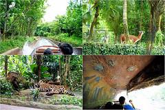 29 (樂活的大方) Tags: 20170724sb 新加坡動物園 river safari
