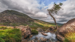 Tree of life ..... (Einir Wyn Leigh) Tags: landscape ogwen wales love rugged rural walking mountains river stream water sky clouds cymru green summer july white scenery scenic light sunshine nature natural