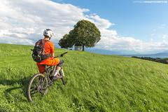 Mountainbiker am Bodensee #1 (PADDYSCHMITT.DE) Tags: mtb mountainbikerambodensee biker freerider bodensee lakeofconstance radelnambodensee buche aussichtspunkt weissensberg lindau alpen föhnambodensee sommerambodensee