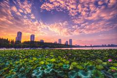 Sunset at Xuanwu Lake (asusmt) Tags: nanjingshi jiangsusheng china cn xuanwulake sunset city cityscape skyline lake cloud twilight dusk flower lotus water waterlily