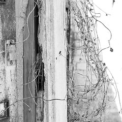 Down in Mississippi (45) (momentspause) Tags: photography mississippi canon5dmkiii niftyfifty canonef50mmf18 blackandwhite bw