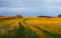 Cesta do polí (Honzinus) Tags: léto summer pole fields skrovnice czech čechy česko agro venkov