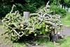 Matchstick Materials - Cruickshanks Botanic Garden Aberdeen Scotland 2017