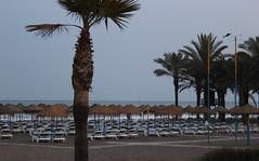 Spain: Carihuela Beach (♥ Corry ♥) Tags: carihuela spain spanje beach strand zee ocean sea palmtrees trees palmbomen bomen ligbedden sunbeds relaxing ontspannen holiday vacantie canon landscape landschap entertainment vermaak summer zomer andalusië andalucia outdoor buiten sky blue lucht blauw sand zand ngc