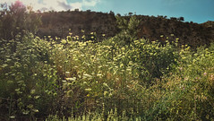 Sunlight hugs (ikonoklasm) Tags: ifttt 500px field sky landscape nature greece travel sunlight tree summer leaf grass wood sight flare mountain flora agriculture hill panoramic outdoors greenery wildflowers scenic no person