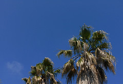 (vik.gaponenko) Tags: vik seacalf outdoor summer day city sochi calm walk street palm warm nature view sony sky tree