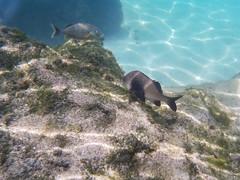 Couple of Fish (Jerry Bowley) Tags: rivieramaya xelha ecopark fish snorkeling allinclusive