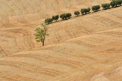 Summer texture (luporosso) Tags: natura nature naturaleza naturalmente nikon scorcio scorci country countryside alberi trees texture paglia campagna marche italia italy