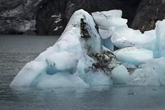 iceberg+-+Prince+William+Sound+glacier+cruise+Alaska