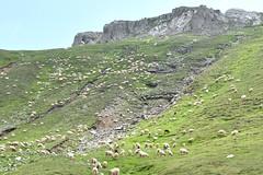 1DSC_4323 (Radu Pavel) Tags: rebaño ovejas sheep herd schaf herde radu pavel fotononstop cosmos radupavel ©radupavelallerechtevorbehalten ©radupaveltodoslosderechosreservados ©radupavelallrightsreserved munțiibucegi munțiicarpați românia carpathian mountains bucegimountains carpathians landscape romania 2013 trekking hiking ecotourism travel outdoor explore world earth nature peaceful serene bucegigebirge karpaten gebirge landschaft aussicht reisen rumänien wandern welt explorierung erde natur ruhig geruhsam imfreien montesbucegi montescárpatos montañas rumania paisaje vista viaje mundo exploración tierra natura alairelibre