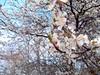 🌸 (Laura Rozentāle) Tags: spring flower lithuania latvia palanga sun photo photographer warm familytrip weekend holiday macro sony focus macrophotography nationalgeographic macroshots