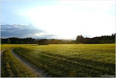 Abendausklang (mayflower31) Tags: sommer weg wiese himmel wolken sky clouds walking spaziergang