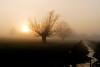 Sunset fog (rvjak) Tags: brouillard france bourgogne burgundy sunset coucher de soleil fog landscape paysage bucolique campagne ruisseau river d200 nikon arbres tree nature by rivière