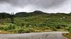 Loch Ard Forest (AdMaths) Tags: adammatheson adammathesonphotography aberfoyle lochard forest lochardforest lochlomondnationalpark trossachs mountainbiking mountainbike mtb motorola motorolamotog motog cameraphone phone forestrycommission forestrycommissionscotland scotland scottishlandscape scottish scenery scene scottishscenery landscape stirlingshire stirling