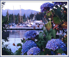 Evening on the harbour (FernShade) Tags: vancouver coalharbour scenery scenic yachts hydrangeas britishcolumbia westcoast pacificnorthwest